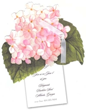 Product Image For Hydrangea