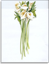 Product Image For Vase of Calla Lilly